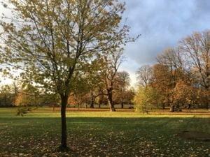 Trees in Ruskin Park
