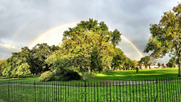 Tree with rainbow in Ruskin Park